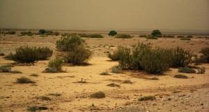 Desert01(js)